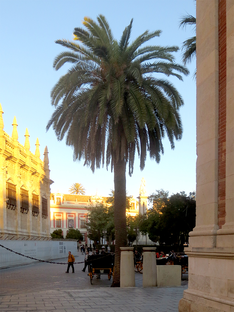 Cathedral with Palm