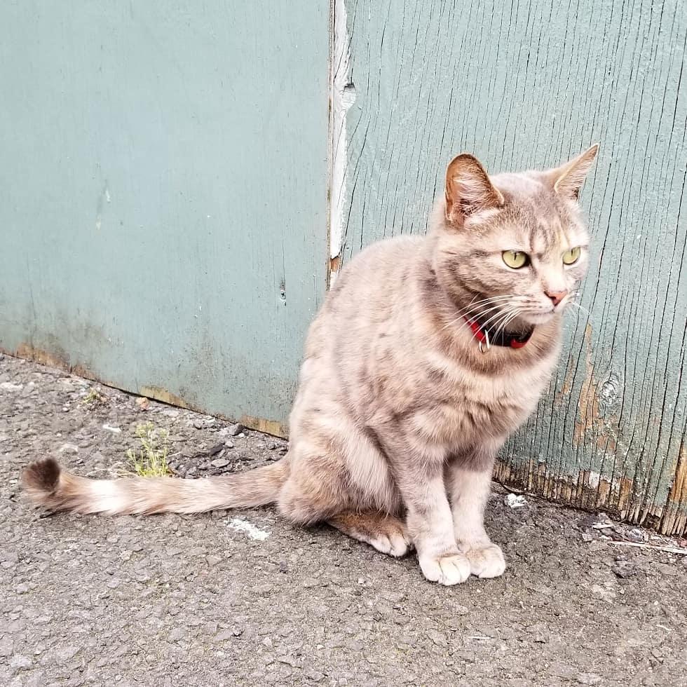 Dean Village Cat